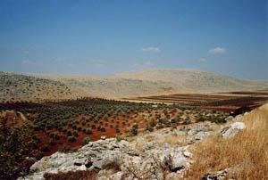 Champs d'oliviers à la frontière Syrienne